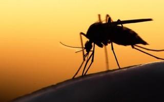 Κουνούπια!!!  Κρατήστε τα μακριά!